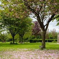 Restoring the natural beauty of the Garden of Remembrance